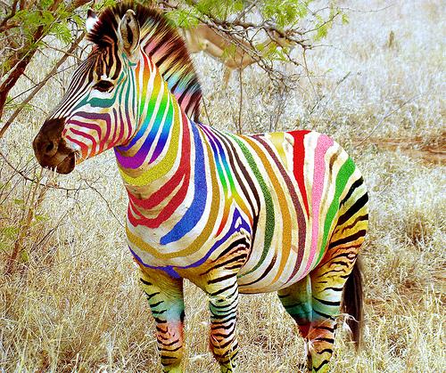 Поздравление с днем рождения зебра и радуга