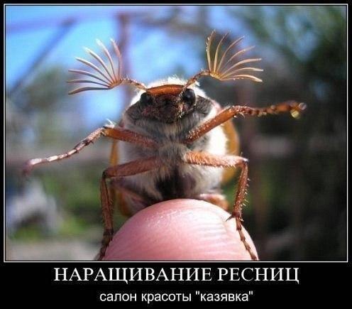 Фото приколы - Страница 4 2427990