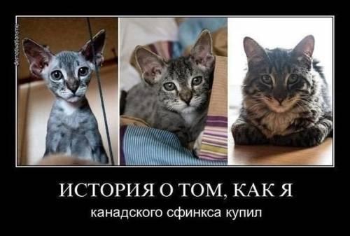 Фото приколы - Страница 4 833001735